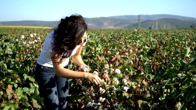 Woman picking up cotton