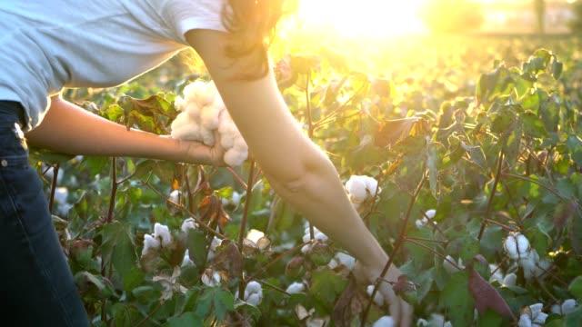 Woman picking up cotton