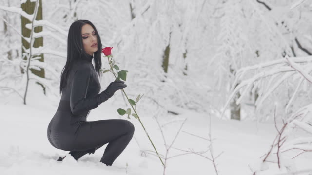 Woman picking up Red Rose flower on a snowy fields