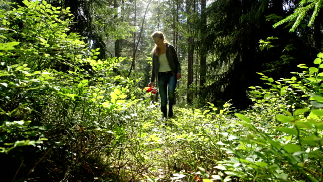Woman Picking Wild Berries Using a Special Harvester in National Park Forest video