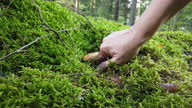 istock Woman Picking Wild Mushroom In Green Forest 1340592396