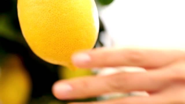 woman picks a lemon and put it in the basket wicker video