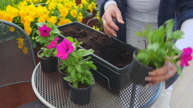Woman plant flowers into flower pot