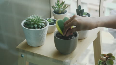 stockvideo's en b-roll-footage met vrouw planter voedt haar cactus op het kleine terras - video voorraad - decoraties