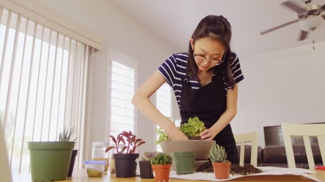 woman planting an indoor succulent garden - gardening video stock e b–roll