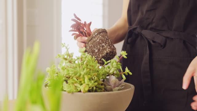 donna che pianta un giardino succulento al coperto - gardening video stock e b–roll