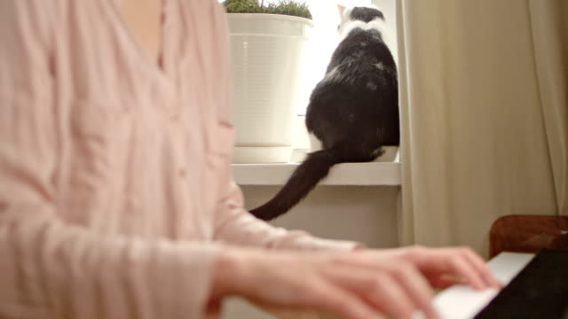 Woman playing classical piano. Cat pet in background.