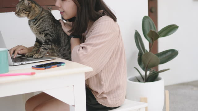 Woman playing with cat over a laptop