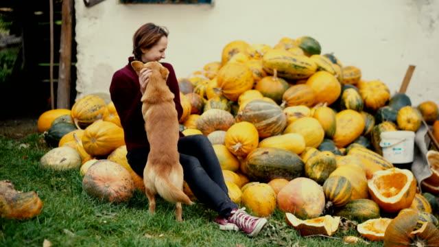 woman playing with dog near huge amount of pumpkins - zucca legenaria video stock e b–roll
