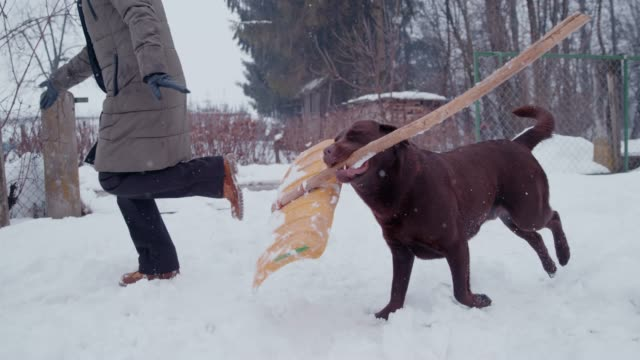 slo mo kvinna leker med sin hund på bakgården i vinter - skyffel bildbanksvideor och videomaterial från bakom kulisserna