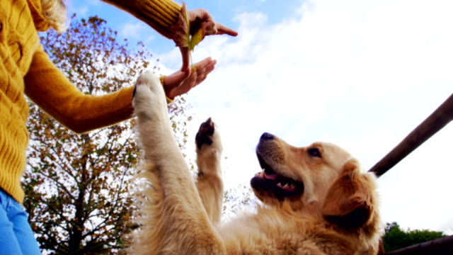 woman playing with her dog in ranch 4k - fedeltà video stock e b–roll
