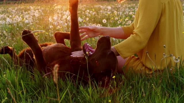 SLO MO mujer jugando con su perro en la hierba - vídeo