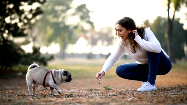 vídeos de stock e filmes b-roll de woman playing with pug in a park - agachar se