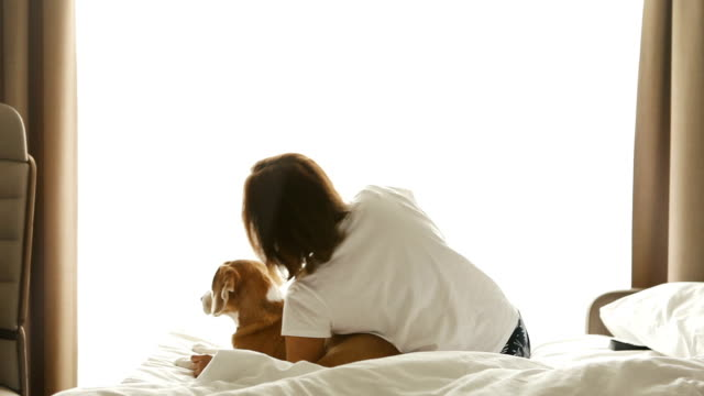 Woman plays with beagle dog in bed video