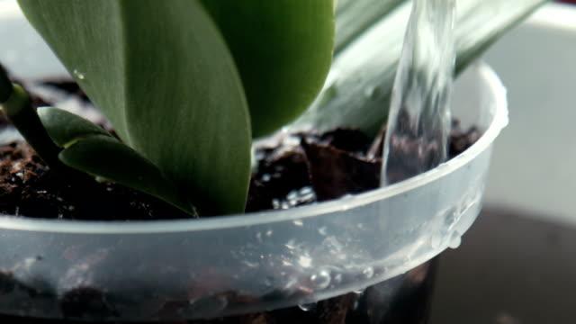 eine frau tropfen wasser auf orchidee - orchidee stock-videos und b-roll-filmmaterial