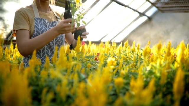 市場のために花を準備する女性 - 花市場点の映像素材/bロール