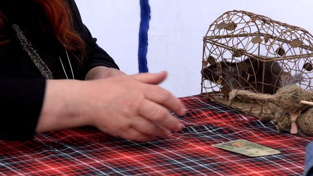 女性は、檻の中で、太ったねずみの手と占い師からタロット カードを引き出します。 ビデオ