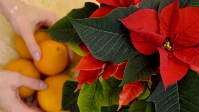 Woman put oranges under christmas flower video