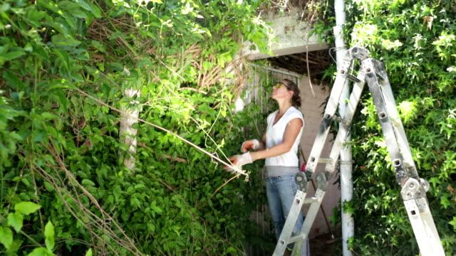 vídeos de stock e filmes b-roll de mulher pronta para apagar repleto de vegetação jardim - hera trepadeira