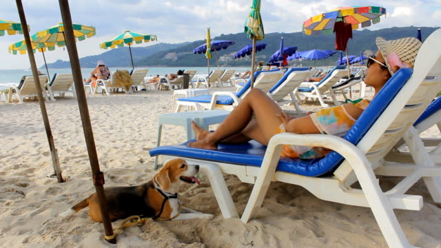 Woman relaxing on the beach with her dog video
