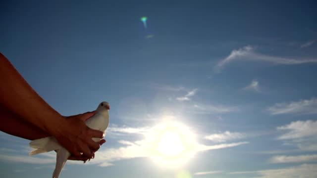 donna rilasciato colomba nel cielo - colomba video stock e b–roll