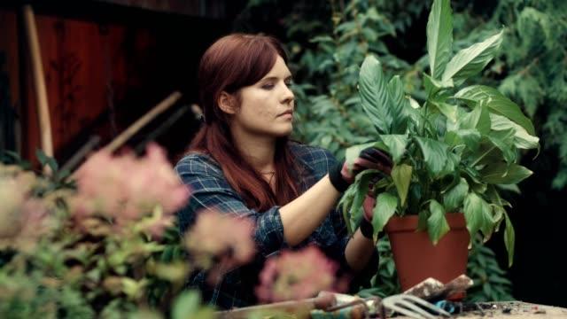 vídeos y material grabado en eventos de stock de mujer volver a plantar flores en el jardín - tiesto