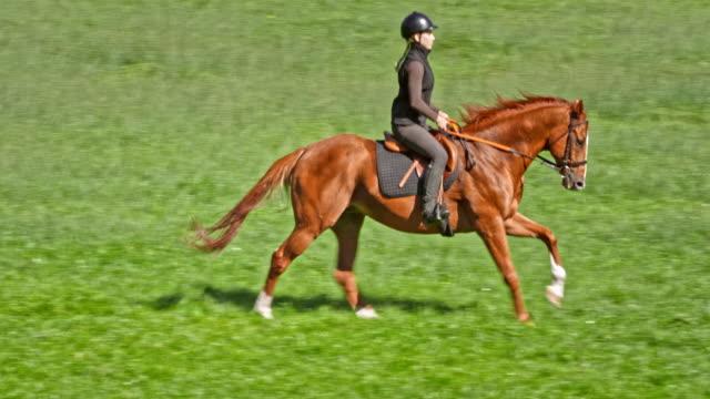 SLO MO TS femme monté sur un cheval au galop dans la Prairie - Vidéo
