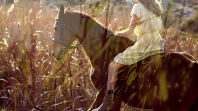 woman riding a horse in the fields - equino video stock e b–roll