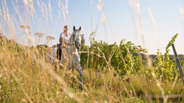 SLO MO Woman riding horse in meadow Slow motion camera stabilization shot of a blonde woman riding her white horse in meadow. Also available in 4K resolution. saddle stock videos & royalty-free footage