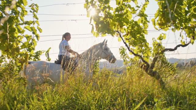 rallent donna cavalcare un cavallo attraverso un vigneto - attività equestre ricreativa video stock e b–roll