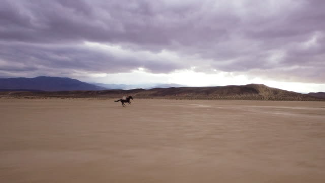 (Drone) Woman Riding Horses in the Desert 04 video