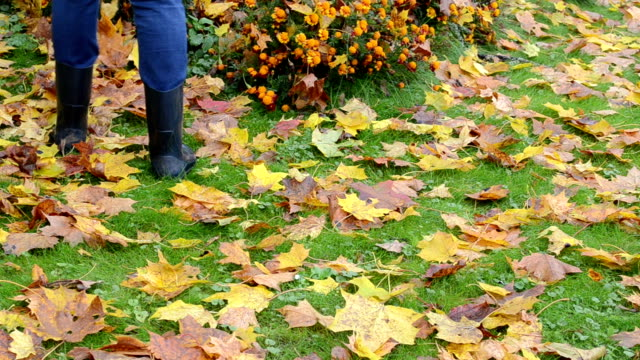 woman rubber boots rake autumn maple tree leaf flower bed video