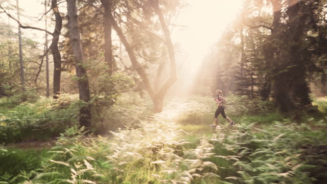 AERIAL Woman running through forest in morning sunshine video