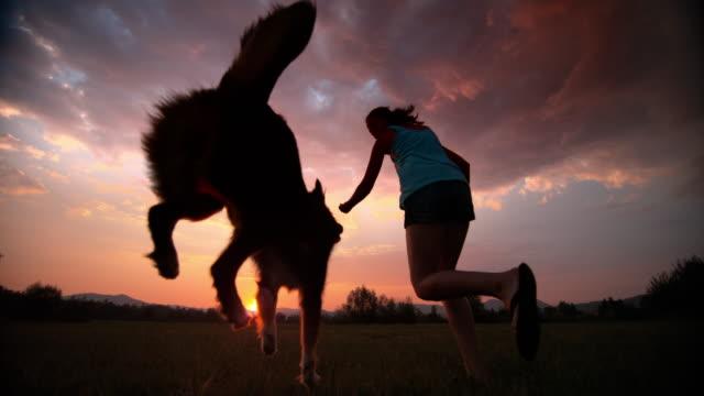 vídeos de stock, filmes e b-roll de slo mo mulher correndo com seu cachorro no prado ao pôr do sol - cão
