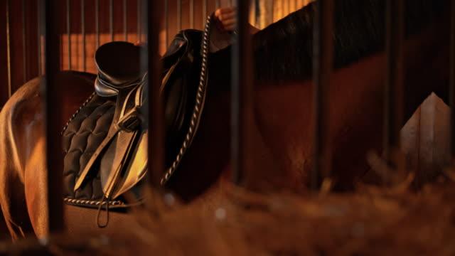 slo mo ds donna saddling un cavallo nella stalla - sella video stock e b–roll