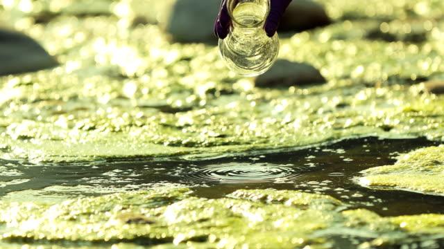 vídeos de stock, filmes e b-roll de mulher cientista tirando uma amostra de água poluída - amostra científica