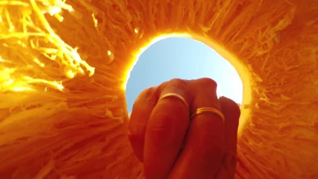 donna che raccoglie semi dalla zucca - incisione oggetto creato dall'uomo video stock e b–roll