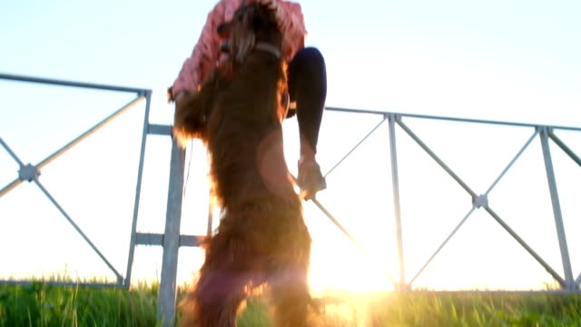 Woman scratches a dog at sunset, the pet rises on the hind legs Woman scratches a dog at sunset, the pet rises on the hind legs. irish setter stock videos & royalty-free footage