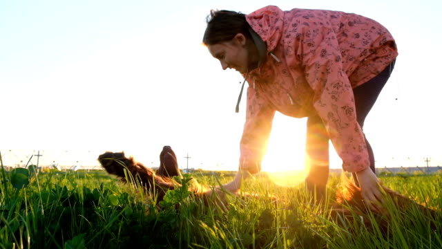 Woman scratches dog reflex at sunset, pet lies in grass Woman scratches dog at sunset, pet lies reflex in grass. television host stock videos & royalty-free footage
