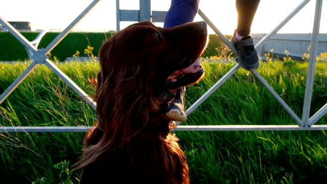 Woman scratching her foot at the sunset, a young girl with a pet sit on a bridge Woman scratching her foot at the sunset, a young girl with a pet sit on a bridge. irish setter stock videos & royalty-free footage