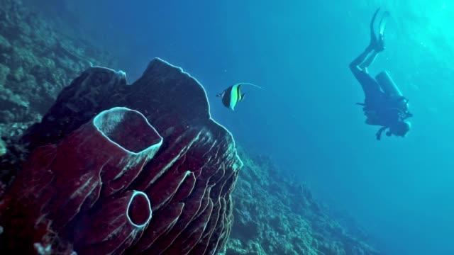 vídeos y material grabado en eventos de stock de mujer buceo natación sobre esponja barril (xestospongia testudinaria) arrecife de coral, islas phi phi - escafandra autónoma