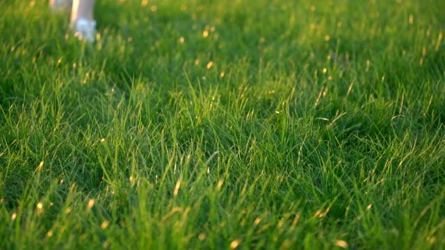足で見た女性は緑の草の上を歩くだけ - 靴点の映像素材/bロール