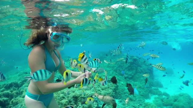 vídeos y material grabado en eventos de stock de cámara lenta debajo del agua : mujer haciendo esnórquel y alimentándose exóticas de peces de arrecife - tubo