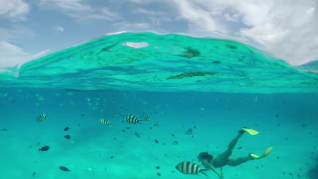 vídeos y material grabado en eventos de stock de cámara lenta debajo del agua : mujer haciendo esnórquel exóticos de coral y peces tropicales - tubo