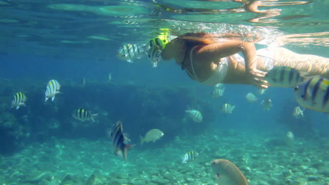 Woman snorkeling in the red sea. video
