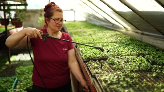 donna che spruzza piante da fiore in una serra - tubo flessibile video stock e b–roll