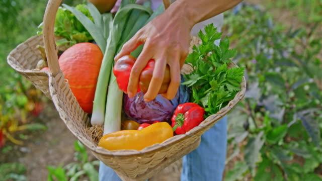 vidéos et rushes de slo mo femme restant dans le jardin plaçant des poivrons rouges dans un panier - potager