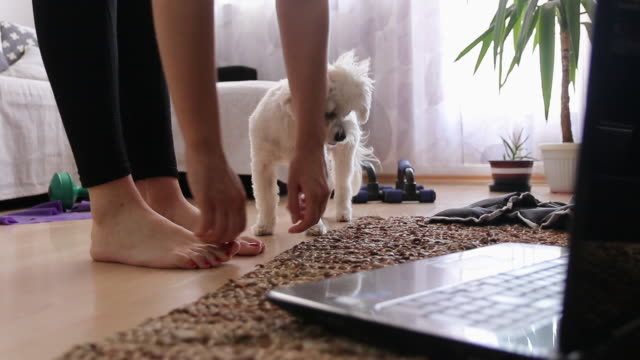 kobieta rozciągająca się i oglądająca trening online na laptopie ze swoim psem w domu - rozgrzewka filmów i materiałów b-roll