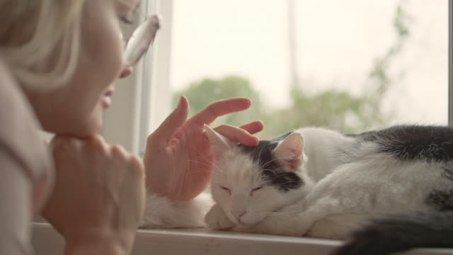 Woman strokes cute sleeping cat at windowsill
