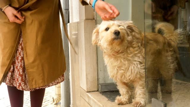 woman strokes fluffy local dog standing near shop entrance - vídeo